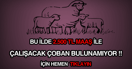 çoban iş ilanları