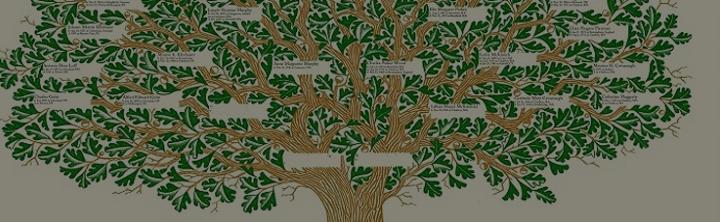 Soy Ağacı Nedir Soy Ağacı Nasıl öğrenilir Bulunur çıkartılır