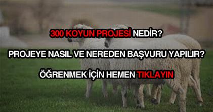 300 koyun projesi başvurusu