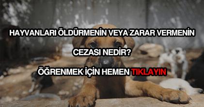 Hayvanlara zarar vermenin cezası